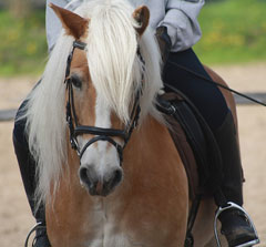 Wellington horse riding lessons